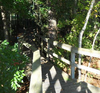 Blue Heron Nature Center Ridgeland Sc