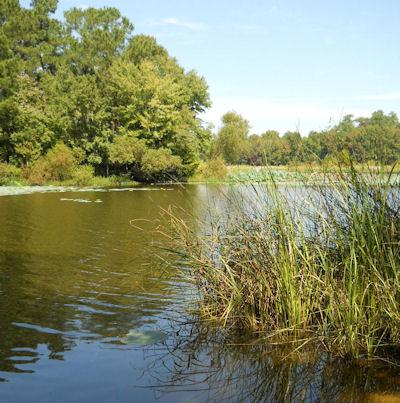 Potato creek hatchery waterfowl management area for Potato creek cabins